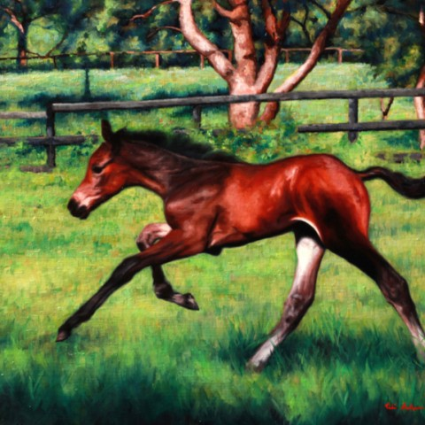 Title: Born To Run, Medium: oil on linen, Size: h 50cm x w 60cm, available